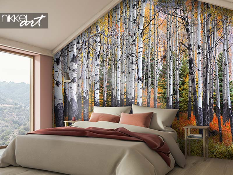 Wall murals Many Aspen trees in a forest during autumn time
