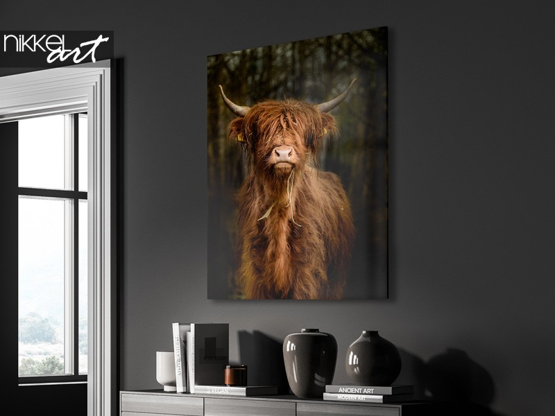 Scottish highlanders as an eye-catcher in your interior