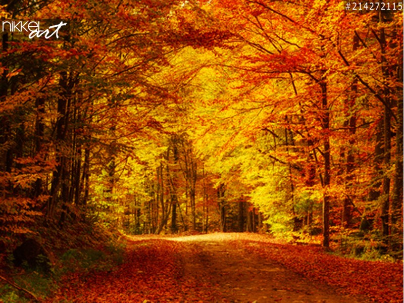 Nikkel Art and VC GREENYARD Maaseik
