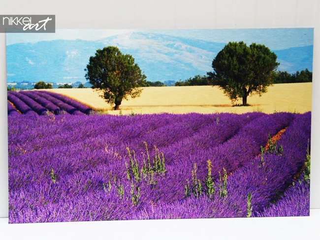 Photo on Aluminium Lavender
