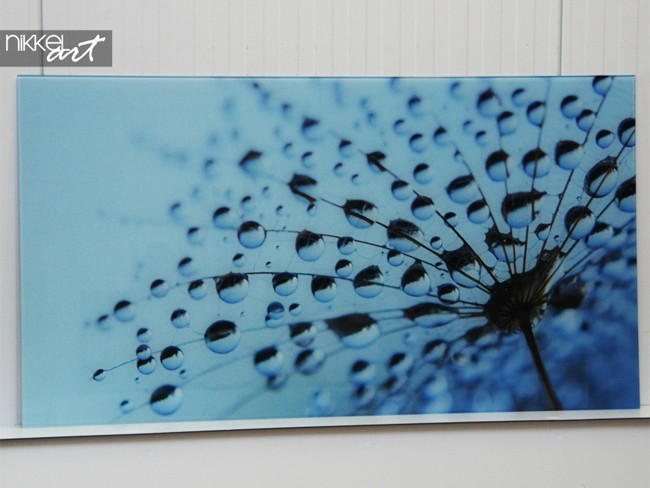 Printed kitchen splashbacks Dandelions and water