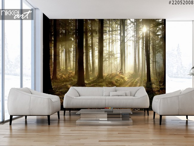 Wall Murals Forest
