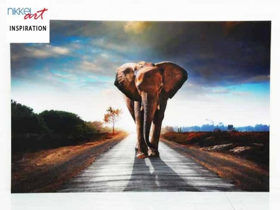 Photo on Acrylic ANTI REFLEX Elephant