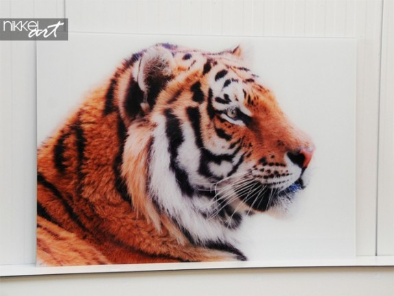Photo on Acrylic Tiger