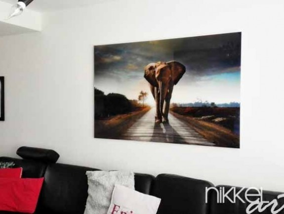 Photo on Acrylic elephant